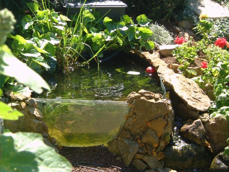 Bassin De Jardin Vitre - Amazing Home Ideas - freetattoosdesign.us